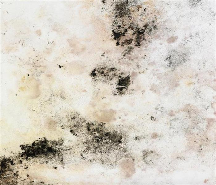 Get Professional Remediation or Mold Damage Mitigation Services in