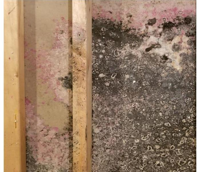 Drywall in Acworth, GA covered with mold
